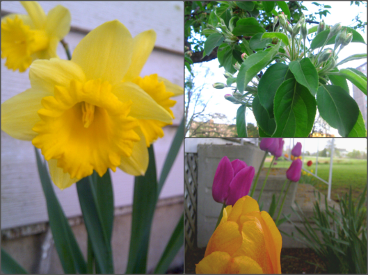 Spring | Invited DIY