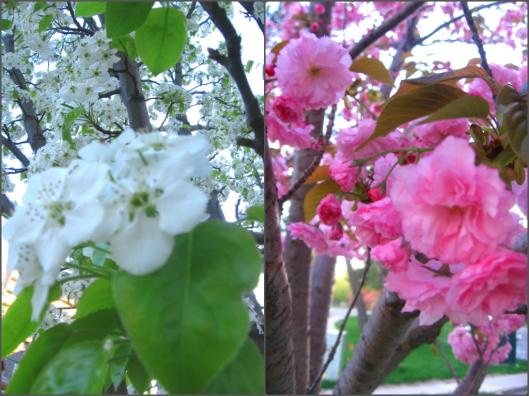 Spring 1 | Invited DIY